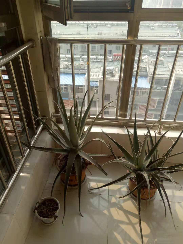 尚城国际 2室2厅  简装 92万房型图